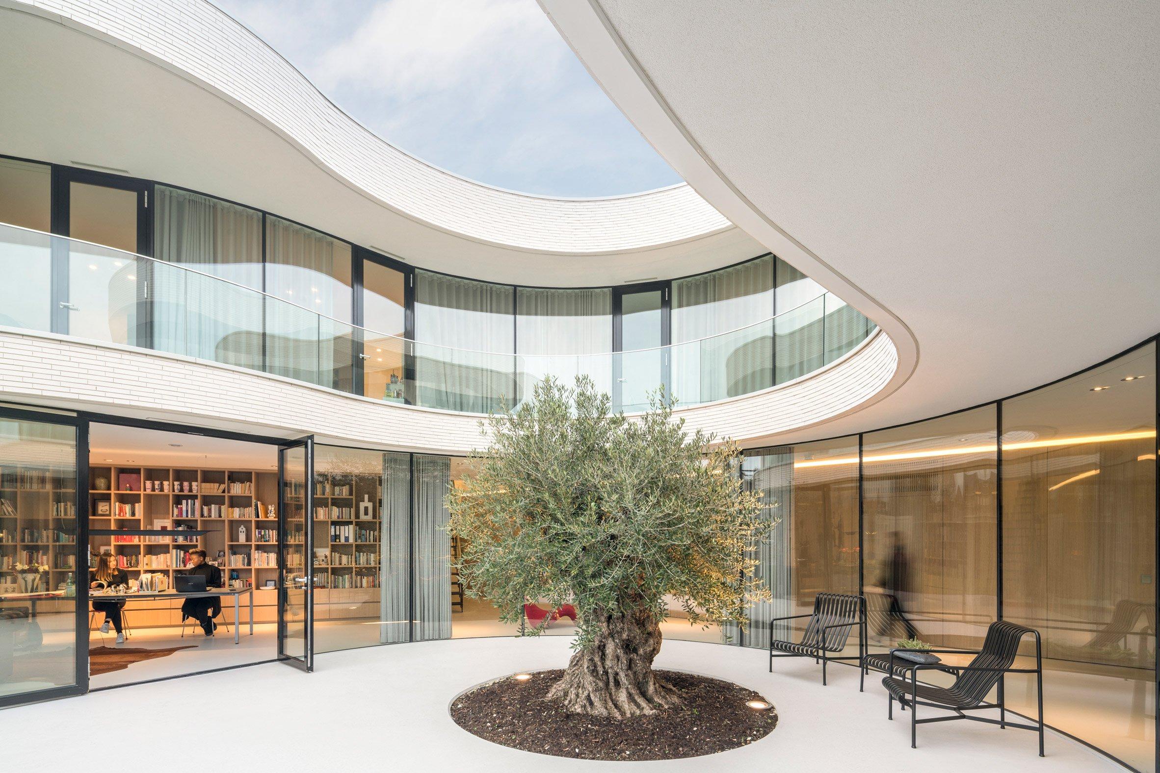 fachada-de-vidro-curvo-em-torno-arvore-oliveira