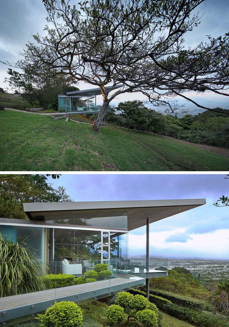 paisagismo-arvore-ficus-em-san-jose-costa-rica